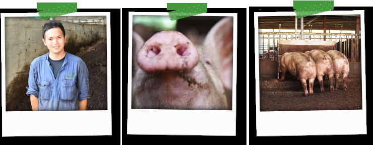 すくすく・のびのび育つ豚